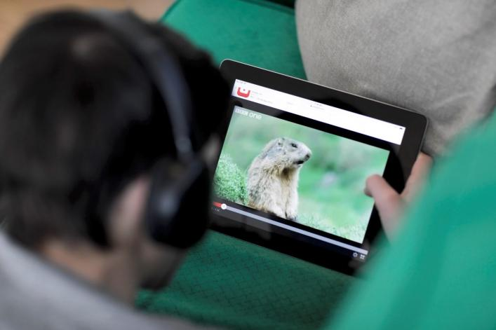 A man wearing headphones watches animal videos on YouTube.